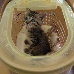 仔猫の通院、動物病院待合室