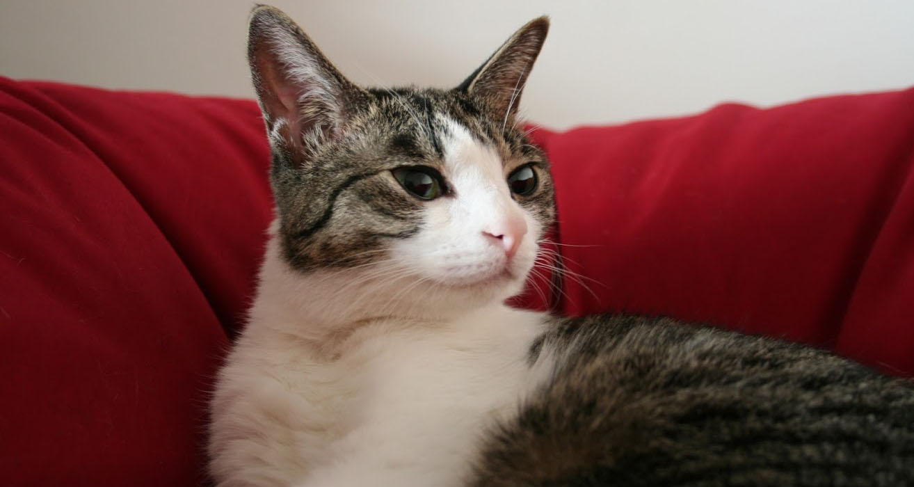 The Cat who.... 猫めくりカレンダー 今日は何の日?