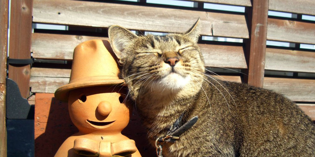 今日はなんの日? The Cat who....
